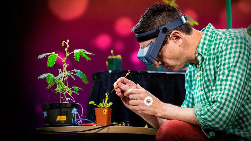 Experimentos que demuestran que las plantas pueden contar y comunicarse