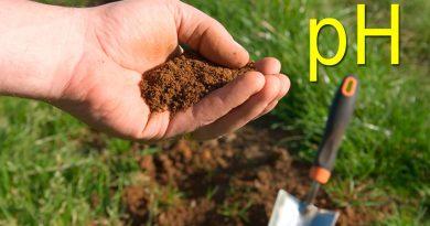 Los mejores medidores de PH de suelo
