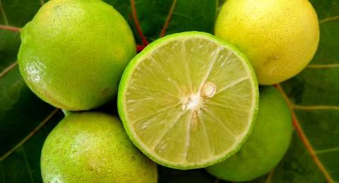 Citrus aurantifolia nuestro limón criollo