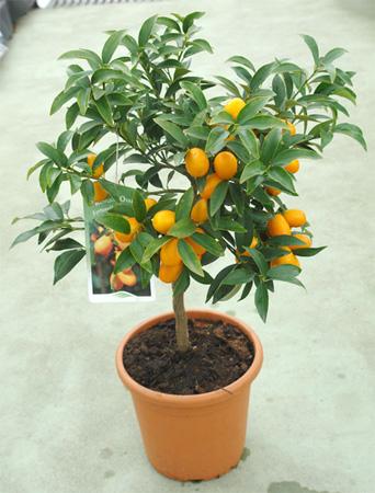 suministro plantas vivero de la sabana en bogot
