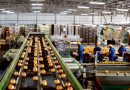 Gestión de riesgos del COVID-19 en la industria de cítricos