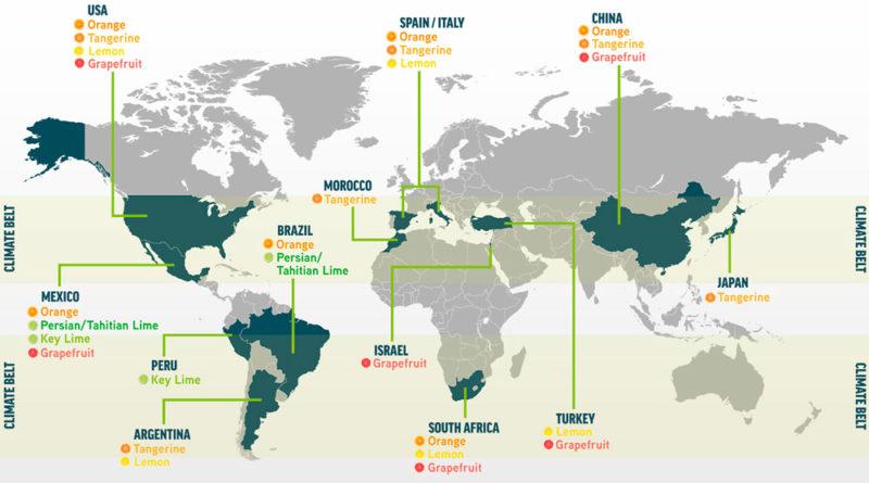 Los principales países productores de cítricos del mundo