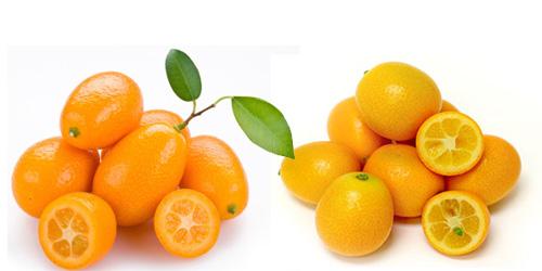 Variedades de kumquats